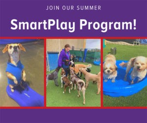 Paws-Resort-SmartPlay-Program-300x251